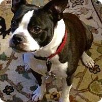 Adopt A Pet :: Bailey Kayne FL - various cities, FL
