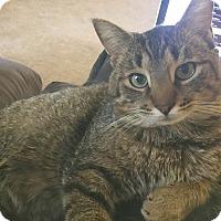 Adopt A Pet :: Matey - Oberlin, OH
