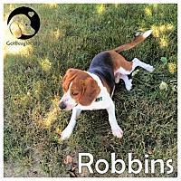 Adopt A Pet :: Robbins - Novi, MI