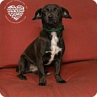Adopt A Pet :: Dori - Inglewood, CA