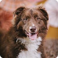 Adopt A Pet :: Chap - Portland, OR