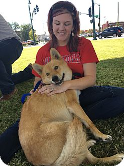 Shiba Inu/Chow Chow Mix Dog for adoption in Manhattan, Kansas - Hazel