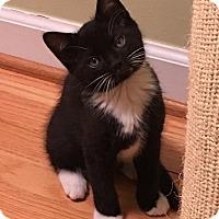 Adopt A Pet :: Baxter - Mount Pleasant, SC