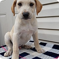 Adopt A Pet :: Ace Baby - New Oxford, PA