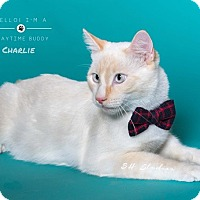 Adopt A Pet :: Charlie - Houston, TX