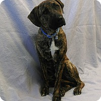 Adopt A Pet :: Zander - Chino Valley, AZ