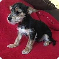 Adopt A Pet :: Donny - Carlsbad, CA
