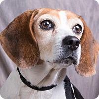 Adopt A Pet :: NOSEY - Anna, IL