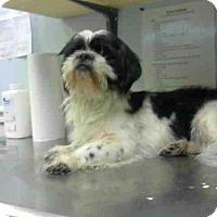 Adopt A Pet :: GUMBO - Atlanta, GA