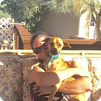 Adopt A Pet :: Armin - Mesa, AZ