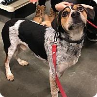 Adopt A Pet :: Roscoe - O'Fallon, MO