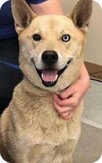 Dog Rescue New Smyrna Beach Fl