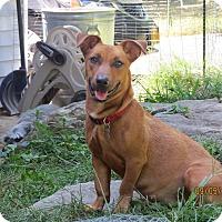 Adopt A Pet :: Sondra - Wappingers, NY