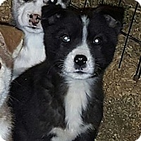Adopt A Pet :: Suluk - Niagra Falls, NY