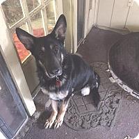 Adopt A Pet :: Bismarck - Nashua, NH