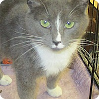 Adopt A Pet :: Leslie - Euclid, OH
