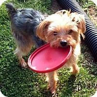 Adopt A Pet :: Dodger - Visa, CA