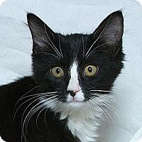 Adopt A Pet :: Nova V - Sacramento, CA