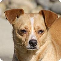 Adopt A Pet :: Eric - Edmonton, AB
