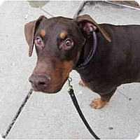 Adopt A Pet :: Chance--adopted!! - New Richmond, OH