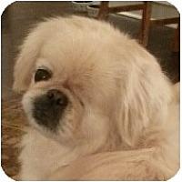 Adopt A Pet :: Norma Jean-PA - Mays Landing, NJ