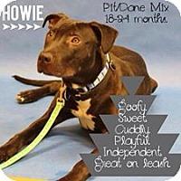 Adopt A Pet :: Howie - Dearborn, MI