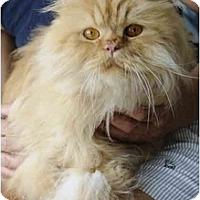 Adopt A Pet :: Caesar - Columbus, OH