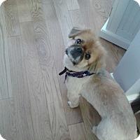 Adopt A Pet :: Cassie - Chantilly, VA