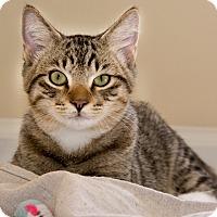 Adopt A Pet :: Chase - Monroe, GA
