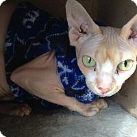 Adopt A Pet :: Sierra - Columbus, OH