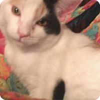 Adopt A Pet :: MASEY - Acme, PA