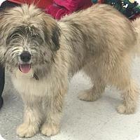 Adopt A Pet :: Teddy - Boulder, CO