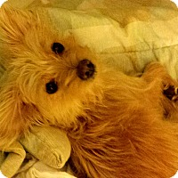 Adopt A Pet :: Rio - Boulder, CO