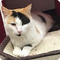 Adopt A Pet :: Tina - Manchester, CT