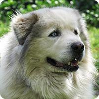Adopt A Pet :: Mickey - Kyle, TX