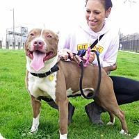 Adopt A Pet :: Astro - Cleveland, OH