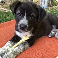 Adopt A Pet :: Carter - Allentown, PA