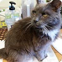 Adopt A Pet :: Merry - Windsor, CT