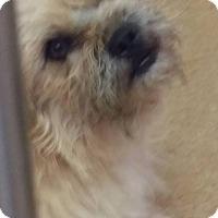 Adopt A Pet :: Audi - Las Vegas, NV
