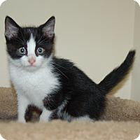 Adopt A Pet :: Bran - Great Mills, MD