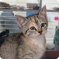 Adopt A Pet :: RUNTS - Springfield, MA