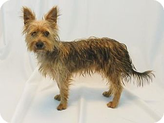 Terrier (Unknown Type, Small) Mix Dog for adoption in New Orleans, Louisiana - Tucker