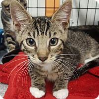 Adopt A Pet :: Rocky Road - Pendleton, NY