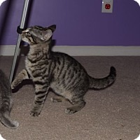 Adopt A Pet :: Gus - Lexington, KY