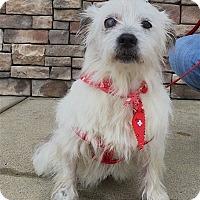 Adopt A Pet :: Queenee - Pulaski, TN