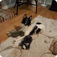 Adopt A Pet :: Tucker - Maryland Heights, MO