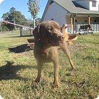 Adopt A Pet :: Tanner - Cumming, GA