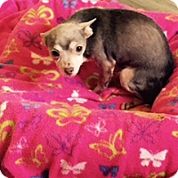 Adopt A Pet :: OTIS - PT ORANGE, FL