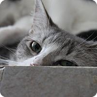 Adopt A Pet :: Bob - McKinney, TX