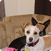 Adopt A Pet :: Sparky - Weeki Wachee, FL